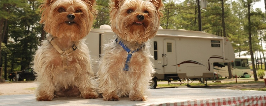 How To Enjoy Your RV Camping With Pet & Pet Accessories